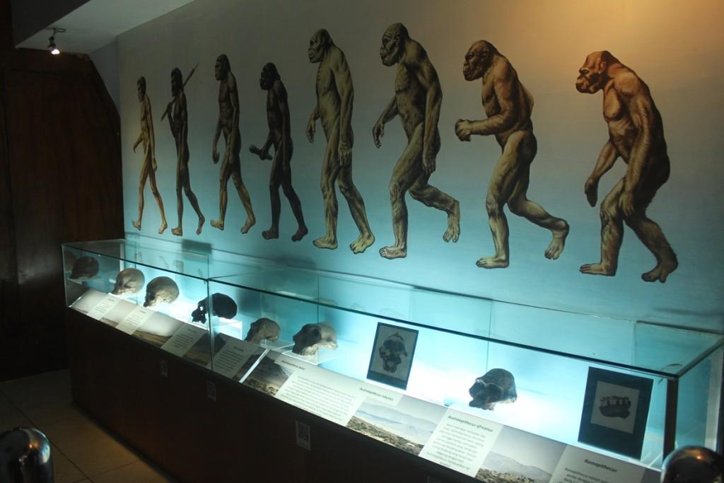 サンギランジャワ原人博物館